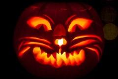 Halloween-tök-macska-ötletek-egy-csokorban-halloweenkor.hu-11