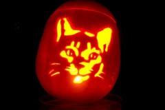 Halloween-tök-macska-ötletek-egy-csokorban-halloweenkor.hu-18