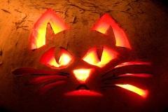 Halloween-tök-macska-ötletek-egy-csokorban-halloweenkor.hu-22