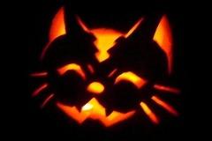 Halloween-tök-macska-ötletek-egy-csokorban-halloweenkor.hu-25