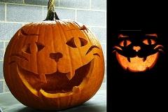 Halloween-tök-macska-ötletek-egy-csokorban-halloweenkor.hu-35