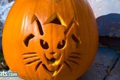 Halloween-tök-macska-ötletek-egy-csokorban-halloweenkor.hu-6