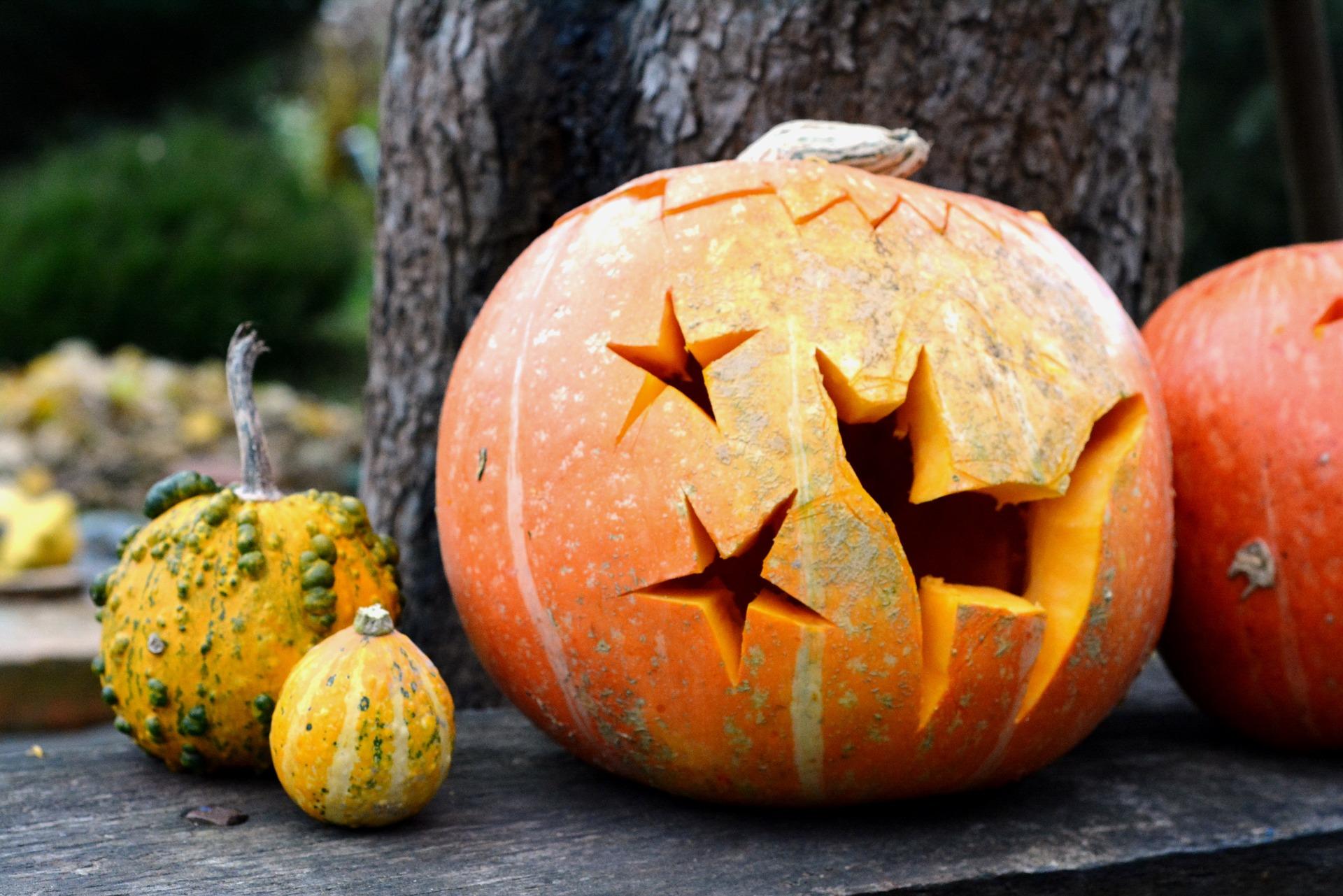 halloween tök minta